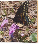 Black Swallowtail Butterfly Wood Print