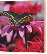 Black Swallowtail Butterfly On Coneflower Square Wood Print