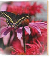 Black Swallowtail Butterfly With Coneflower And Monarda Wood Print