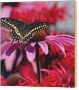 Black Swallowtail Butterfly With Coneflowers And Bee Balm Wood Print