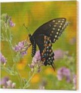 Black Swallowtail Wood Print by Robert Frederick