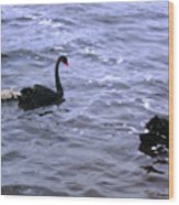 Black Swan Family Wood Print