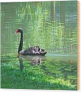 Black Swan Swim In A Pond Wood Print
