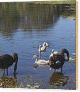 Black Swan's Wood Print