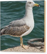 Black Tailed Gull On Dock Wood Print