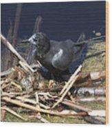 Black Tern On Nest Wood Print