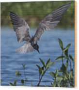 Black Tern Wood Print