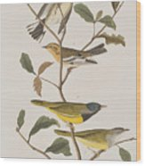Black Throated Green Warbler Blackburnian Mourning Warbler Wood Print