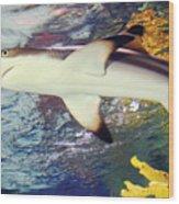 Black Tipped Reef Shark Wood Print