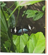 Black Tropical Butterfly Wood Print