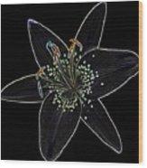 Black Velvet Lily Wood Print