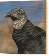 Black Vulture 1 Wood Print