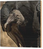 Black Vulture 2 Wood Print