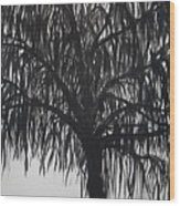Black Willow Wood Print