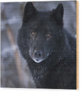 Black Wolf Portrait Wood Print