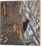 Black Woodpecker Peek Wood Print
