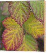 Blackberry Autumn Wood Print