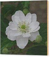 Blackberry Blossom Wood Print
