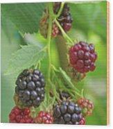 Blackberry Wood Print