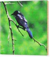Blackbird Wood Print