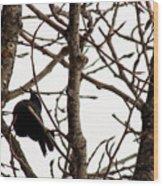 Blackbird In A Tree Wood Print