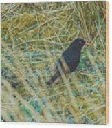 Blackbird In The Undergrowth Wood Print