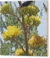 Blackbird Singing Wood Print