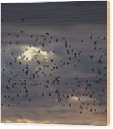 Blackbird Sunset Wood Print