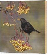 Blackbird Yellow Berries Wood Print