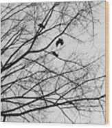 Blackened Birds Wood Print