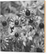 Blackeyed Susans In Black And White Wood Print