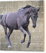 Blackhorse Poetry Wood Print