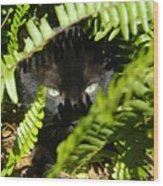 Blackie In The Ferns Wood Print