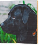Blackiecharlie IIi Wood Print