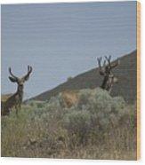 Blacktail Deer 2 Wood Print