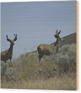 Blacktail Deer 3 Wood Print