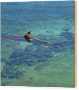 Blacktip Reef Shark Wood Print