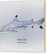 Blacktip Shark Wood Print