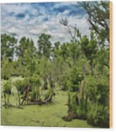 Blackwater Swamp Wood Print