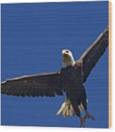 Blad Eagle In Flight-signed- #2699 Wood Print