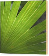 Blades Of Green Wood Print