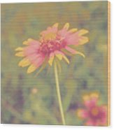 Blanket Flower Portrait Wood Print