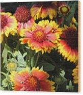 Blanket Flowers Wood Print