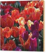 Blankets Of Tulips Wood Print