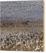 Blast Off Bosque Del Apache Wood Print