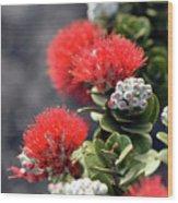 Blazing Blooms Of Ohia Flowers Wood Print