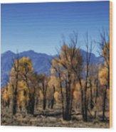 Blazing Cottonwoods Wood Print
