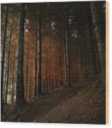 Blazing Forest Wood Print