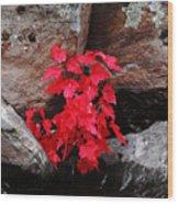 Blazing Maple Wood Print