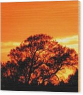 Blazing Oak Tree Wood Print